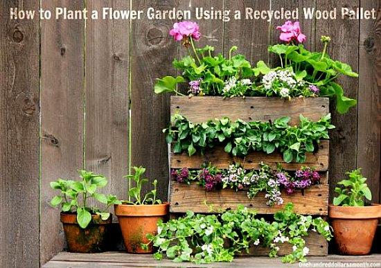 wood-pallet-garden1
