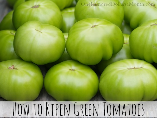 how to ripen green tomatoes one hundred dollars a month. Black Bedroom Furniture Sets. Home Design Ideas
