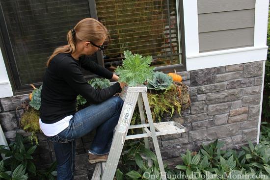 planting a fall window box