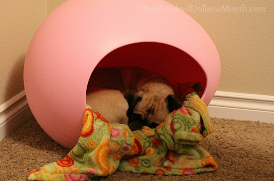 ipet egg bed