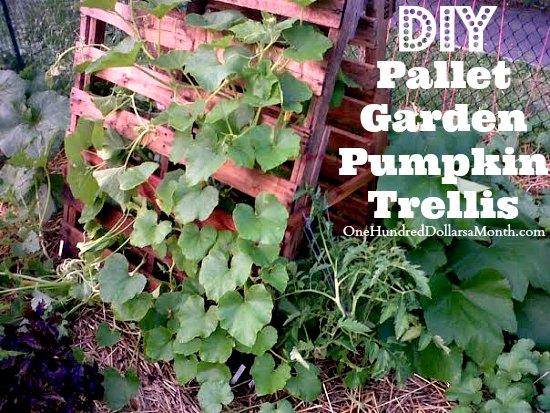 Pallet-Garden-Pumpkin-Trellis