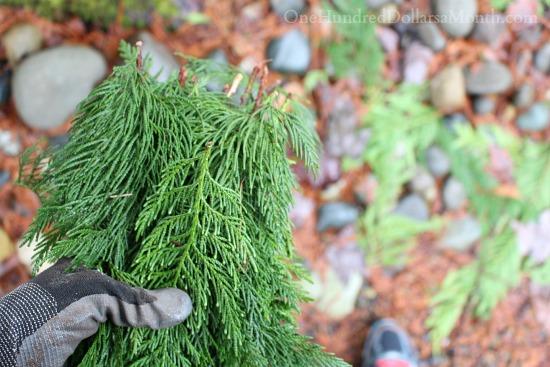 cedar branches