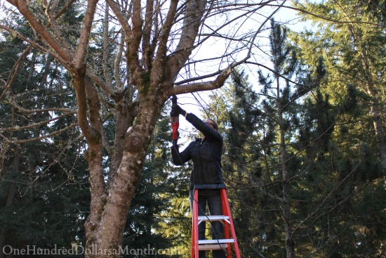 pruning trees reciprocating saw