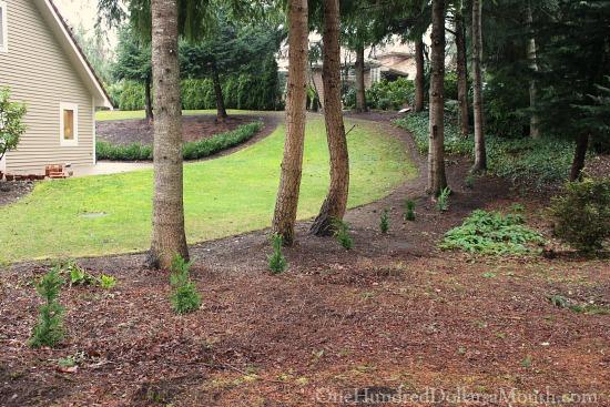 small leland cypress