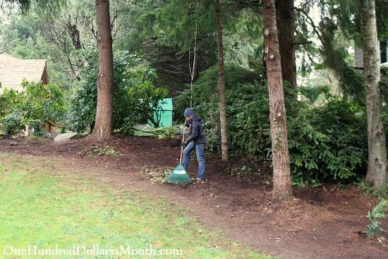 raking up English ivy