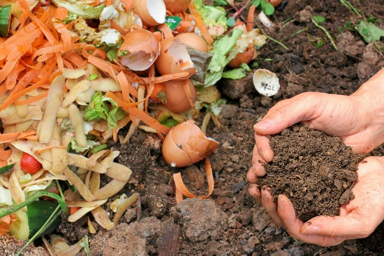 vegetable peelings for compost