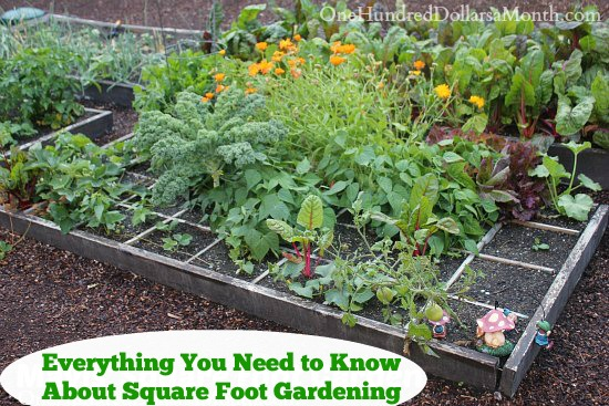 Everything You Need to Know About Square Foot Gardening