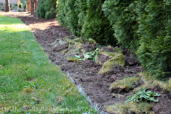 creating a flower bed