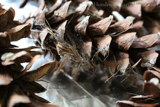 Getting Rid Of Bugs in Pine Cones