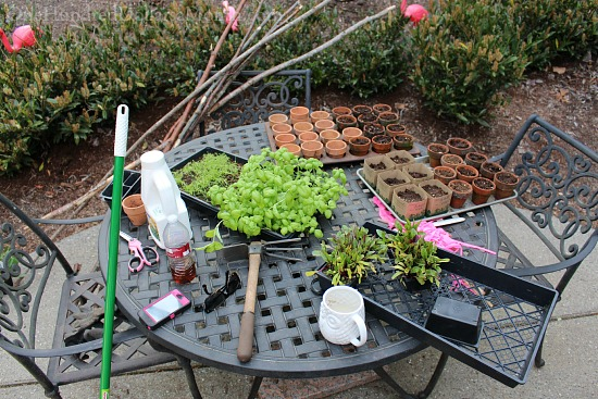 seedlings on patio table