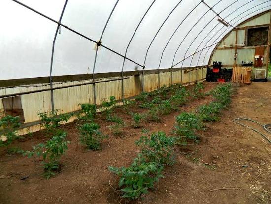 Abigail farm pictures6