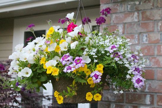 Hanging Flower Baskets Seattle : Mavis butterfield backyard garden plot pictures
