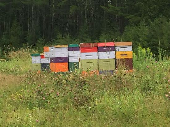 beehives maine