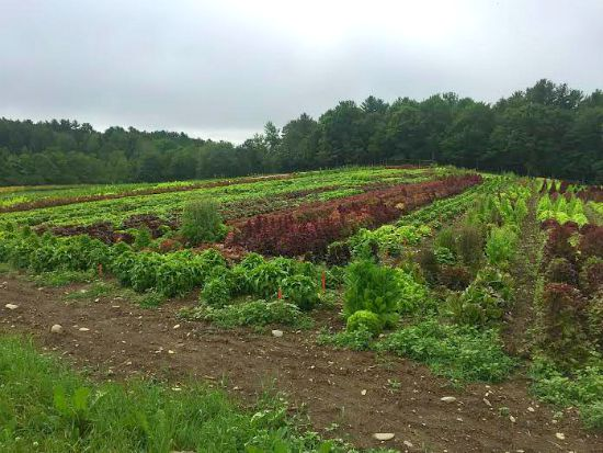 johnnys farm maine pictures