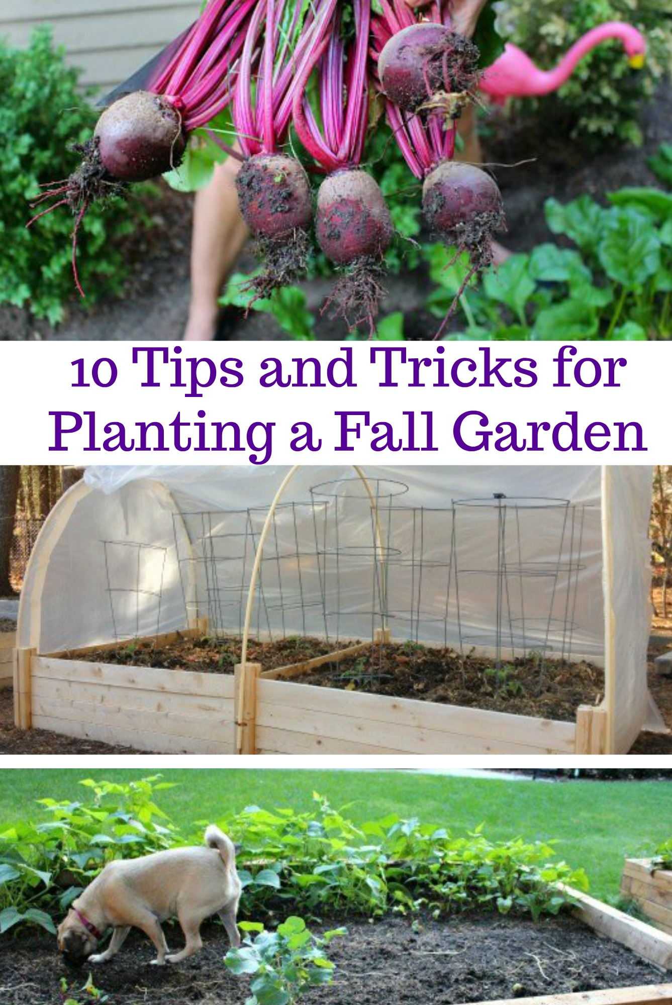 10 Tips and Tricks for Planting a Fall Garden One Hundred