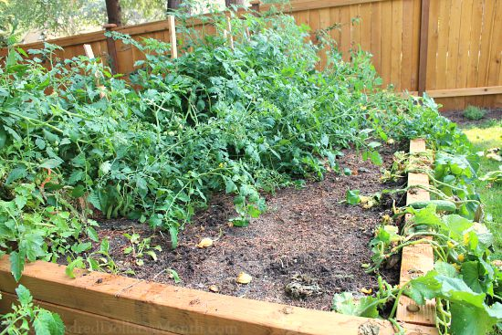 messy garden neds
