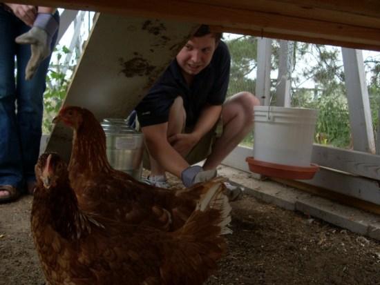 tanya chicken pics2