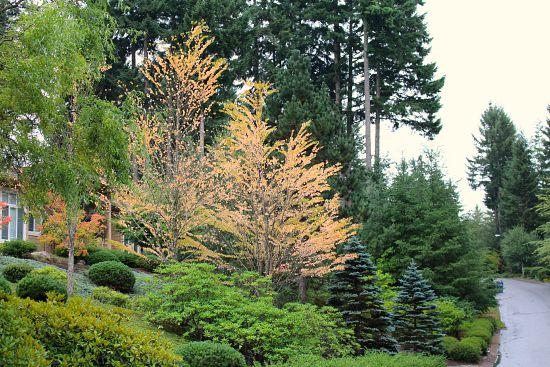 fall foliage leaves