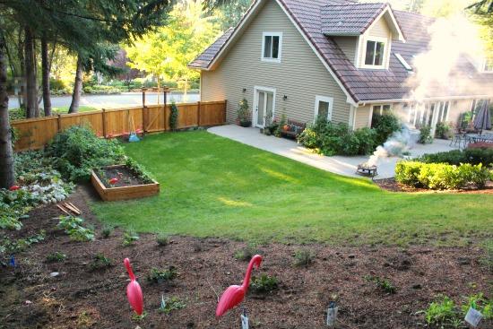 backyard garden suburbia