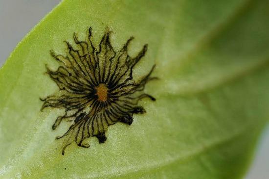 plant idenification