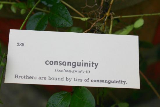 consangunity