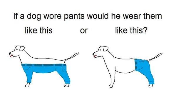 dog wearing pants