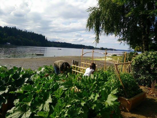 waterfront vegetable garden