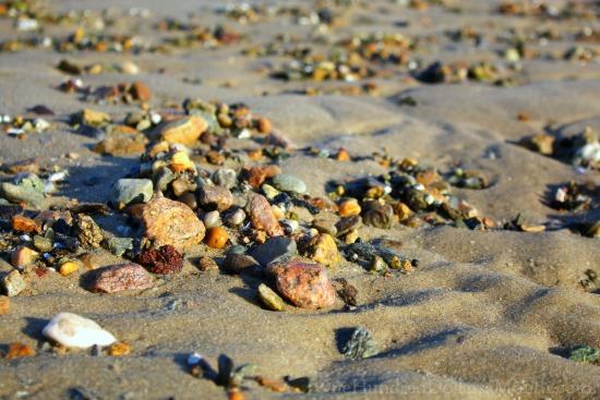 beach shells sand