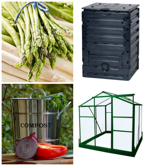 buy asparagus crowns online