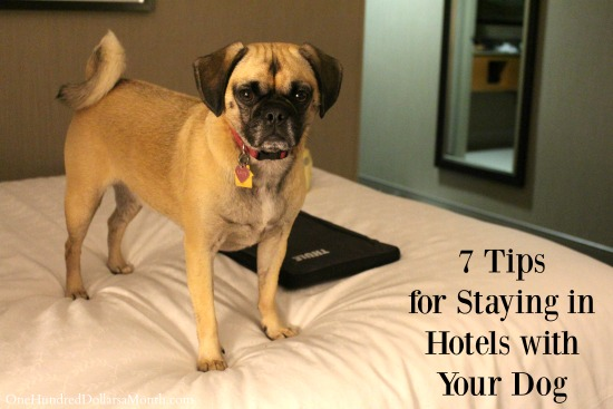 7 Tips for Staying in Hotels with Your Dog