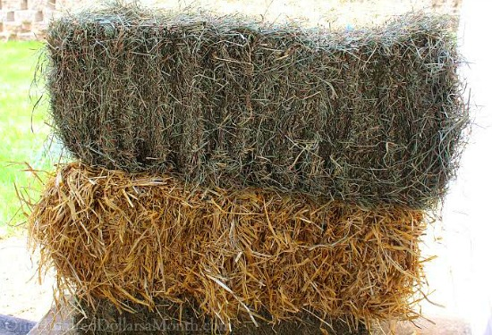 hay or straw