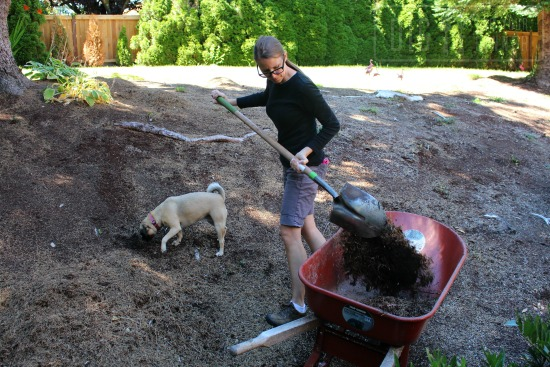 shoveling dirt soil