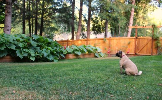 lucy puggle garden