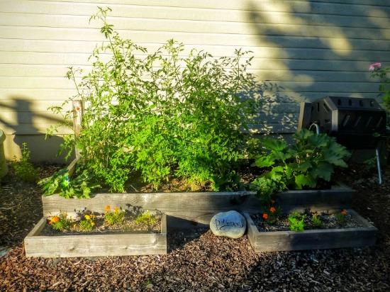 rasied garden bed