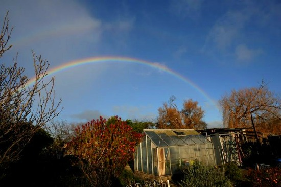 green house rainbow