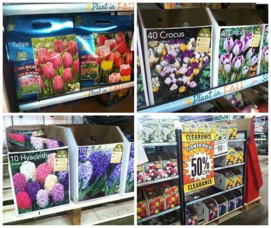 flower-bulbs