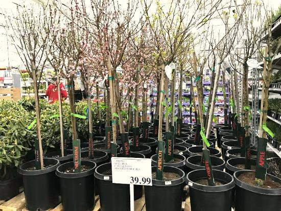 Cherry Trees $39.99