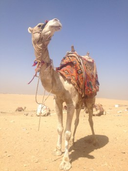 My Camel (Michael Jackson was his name)