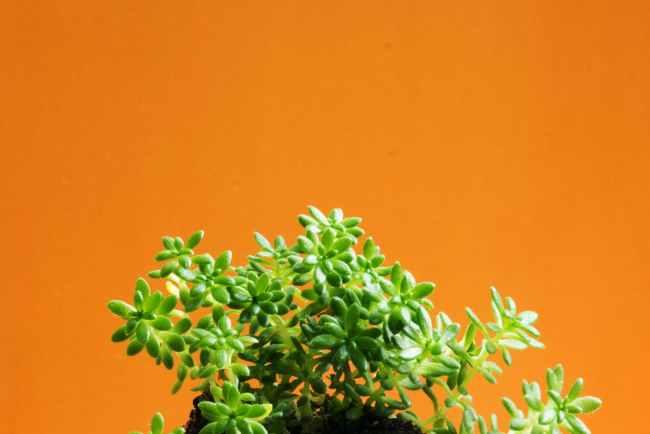 food summer garden pot