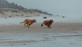 Pacific Ocean Cannon Beach Dogs