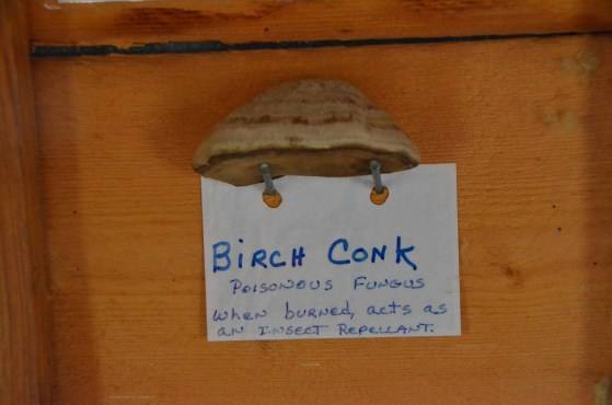 Birch Conk, who knew?