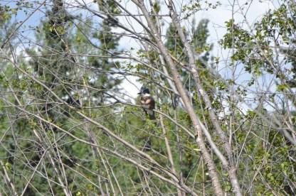Kingfisher neatly camouflaged
