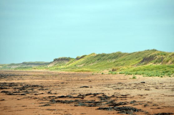 Green grass on the red sand dunes. Gives a feeling of the wind swept nature of the place.