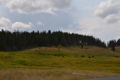 YellowstoneBison_010