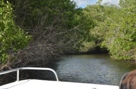 Everglades_051