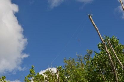 Spider web above.