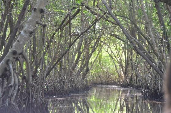 Everglades_064