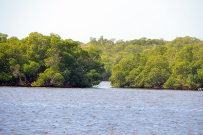 Mangrove islands.