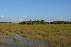 River of grass, this water moves about a foot a day. Note the hammocks of trees.