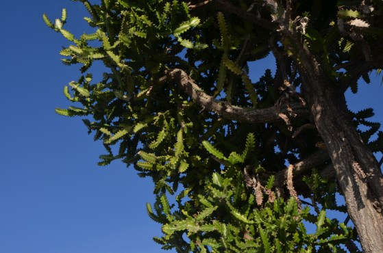 Interesting cactusy tree.